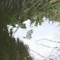 Wildlife Rescue stories