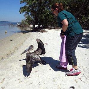 rescue_Amy-releasing-a-pelican