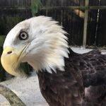 Become a Member Eagle Membership