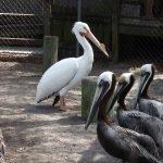 Become a Member Pelican Membership