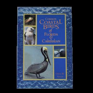 Common Coastal Birds of Florida